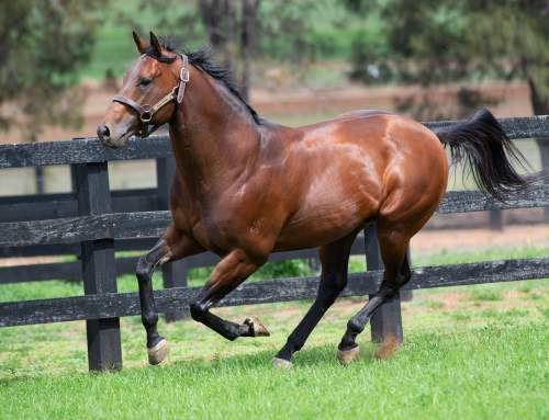 Could Bull Point be the next King of the first season sires?