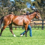 Stallion Unite and Conquer striding out at Kingstar Farm